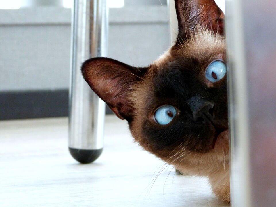 猫、まとめ、スペーサー